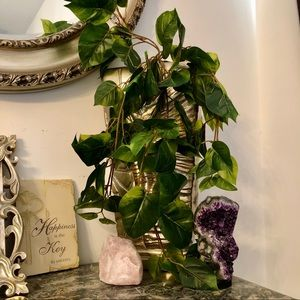 Faux Life Like Real Touch Pothos Vine for Pots